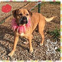 Adopt A Pet :: Amy - Hicksville, NY