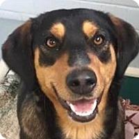 Adopt A Pet :: Peaches - Springdale, AR