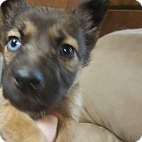Adopt A Pet :: ALASKA - Winnipeg, MB