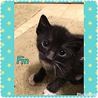 Adopt A Pet :: Fin - Jerseyville, IL