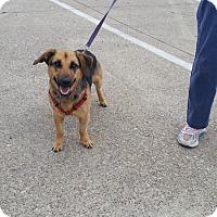 Adopt A Pet :: Shiloh - Dallas, TX