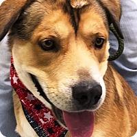 Adopt A Pet :: Major - Casa Grande, AZ