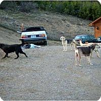 Adopt A Pet :: Big Dog Fosters Needed - Shoreline, WA
