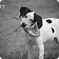 Adopt A Pet :: Avery - Albany, NY