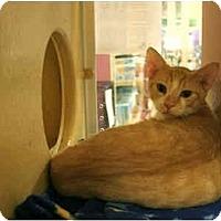 Adopt A Pet :: Zenith - Orlando, FL