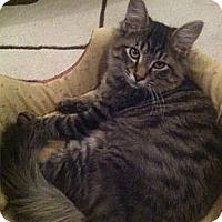 Adopt A Pet :: Hunter (& Freddy) - Arlington, VA