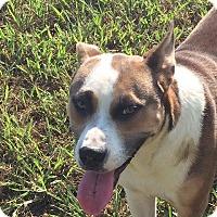 Adopt A Pet :: Pretzel - Auburn, MA
