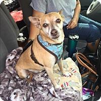 Adopt A Pet :: Orion - Brea, CA