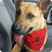 Adopt A Pet :: Kween - waterbury, CT