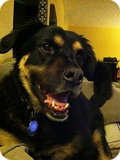 Retriever (Unknown Type) Dog for adoption in Vail, Arizona - Lexi