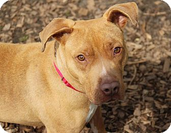 Terrier (Unknown Type, Medium) Mix Dog for adoption in Tinton Falls, New Jersey - Beyonce