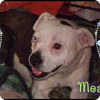 Adopt A Pet :: Mea - Hancock, MI
