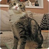 Adopt A Pet :: Blossom - Arlington, VA