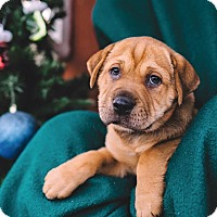 Adopt A Pet :: Luna - Gadsden, AL