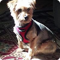 Adopt A Pet :: Chloe - Suwanee, GA