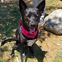 Adopt A Pet :: Julia - San Diego, CA