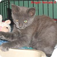 Adopt A Pet :: Angel - Pensacola, FL