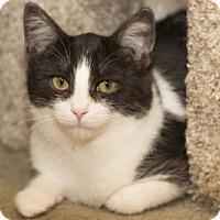 Adopt A Pet :: Nadia - Lombard, IL