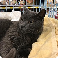Adopt A Pet :: Sky - Fayetteville, GA