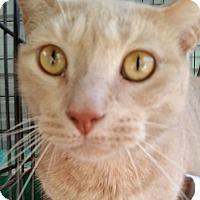 Adopt A Pet :: GARFEILD - Ocala, FL
