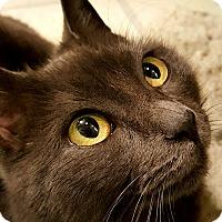 Adopt A Pet :: Willow - Pottstown, PA