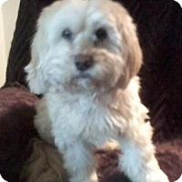 Adopt A Pet :: Buddy M - Battle Ground, WA