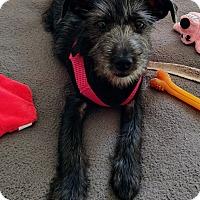 Adopt A Pet :: Zoey - Hampton, VA