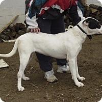 Adopt A Pet :: Lucy - Mt. Laurel, NJ