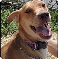 Adopt A Pet :: GALLOWAY - LaGrange, KY