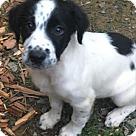 Adopt A Pet :: Baby Sprite