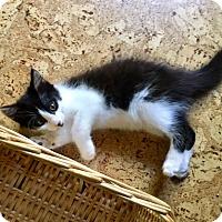 Adopt A Pet :: Colton - Gainesville, FL
