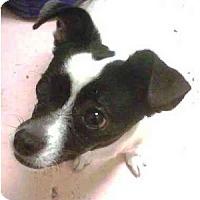Adopt A Pet :: Zee Bee - Gilbert, AZ