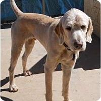 Adopt A Pet :: Bourke - dewey, AZ
