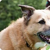 Adopt A Pet :: Gilda - Novelty, OH