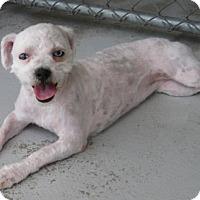 Adopt A Pet :: Bubbles - Lockhart, TX