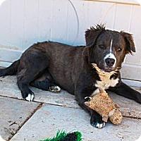 Adopt A Pet :: Kaydee - Phoenix, AZ