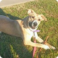 Adopt A Pet :: Bessy - West Hartford, CT