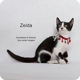 Domestic Shorthair Cat for adoption in Arcadia, California - Zelda