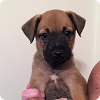 Adopt A Pet :: Meagan - Ft. Lauderdale, FL