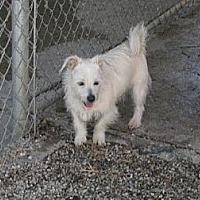 Adopt A Pet :: Benji - Sherman Oaks, CA