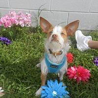 Adopt A Pet :: Jerry Lee - Lockhart, TX