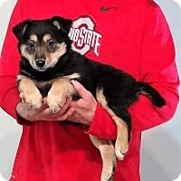 Adopt A Pet :: Teddy - New Philadelphia, OH