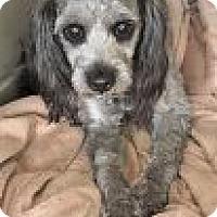 Adopt A Pet :: Zelly - Encinitas, CA