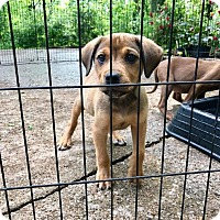Adopt A Pet :: Reid (RBF) - Washington, DC