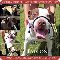 Adopt A Pet :: Falcon - Hearne, TX