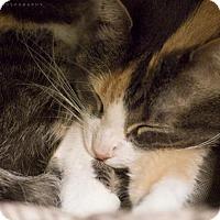Adopt A Pet :: WHITLEY - Houston, TX