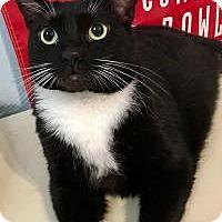 Adopt A Pet :: Katrina - Duluth, GA