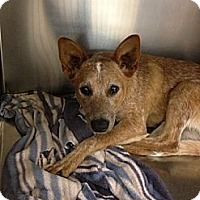Adopt A Pet :: Rose - Lancaster, OH