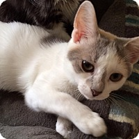 Adopt A Pet :: Pippa - Harrisburg, NC