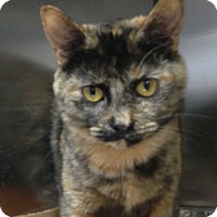 Adopt A Pet :: Crispy - Simpsonville, SC